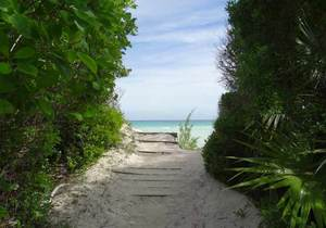 Grand Bahama - Lucayan National Park Kayak & Nature Tour